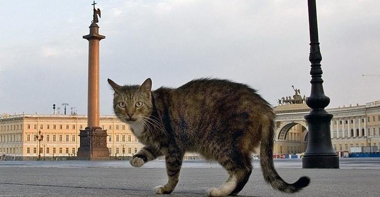 Эрмитажный кот будет оракулом Кубка конфедераций