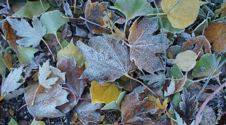 МЧС предупредило Петербург опервых заморозках— Зима недалёко